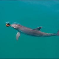Kultúra a palackban - klikkesedő delfinek