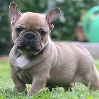 Szenzáció, íme a legnépszerűb hazai kutyafajták listája