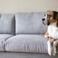 És a kutya hogy bírta a költözést?