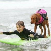 Szörfözve segíti a gyerekeket a kutya - videó