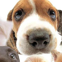 Mennyire egészséges a kutyád? - Interaktív teszt és segítség