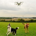 Drónok futtatják a mentett kutyákat