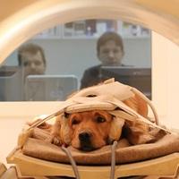 A kutyák tényleg úgy gondolkodnak, mint mi