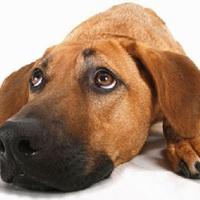 Büdös a kutya? – Ne nyugodj bele, súlyos betegséget is jelezhet