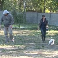 Kötelező póráz helyett városi kutya vizsga jöhet  - videó