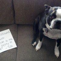 Szégyenkező kutyák  - ne dőlj be a szomorú szemeknek