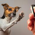 Módszer ideges kutyáknak: figyelj-tovább tréning