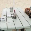 Kutyabarát étterem, bunkó vendégek