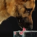 Így ellenőrizheted, hogy eleget iszik-e a kutyád