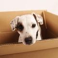 Költözés kutyával - mi így vészeltük át