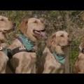Kutyaetológia Konferencia - meghívó