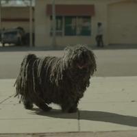 Puli sztár Amerikában - videó