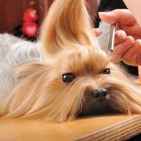 Érdemes-e szőrbontó sprayt venni a kutyának?