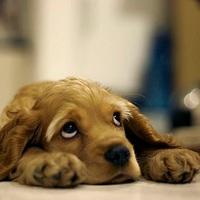 """Amikor """"baleset"""" történik, avagy kutya-takarítási tippek"""