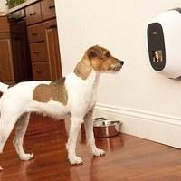 Így videótelefonálhattok a kutyátokkal