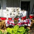(Ilyen volt a) PirosLábos Fesztivál Szigetmonostoron