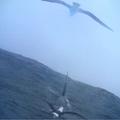 2016.07.09 Felhők közül az albatrosz