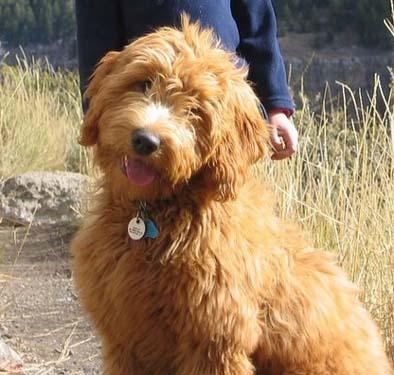Big Fluffy Dog Rescue California