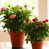 Az otthonod stílusához válassz növényt! 2.rész- Vidéki, rusztikus stílus