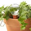 Így tartsd életben a nyaralásod alatt is a növényeidet!