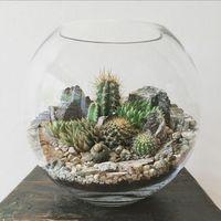 Készíts te is látványos kaktusztálat!