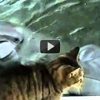 Egy macska és egy delfin