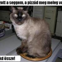 A macska meg a pizza :)