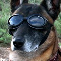 Segítség, extrém sportoló a kutyám!