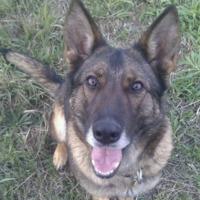 Mit tanulhatsz a hozzáállásodról a kutyák vigyorából?