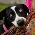10 jellemző arc a kutyasulikból
