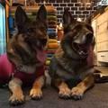A kutyafelügyelet tanulságai