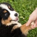 Mi lenne, ha te is úgy tanulnál, mint a kutyád?