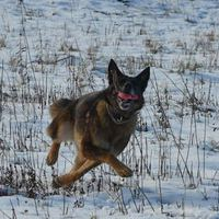 Az egyszeri kutyás kalandjai a csapadékos téllel