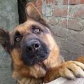 A kutya tehet róla, hogy felénk jár a postás?