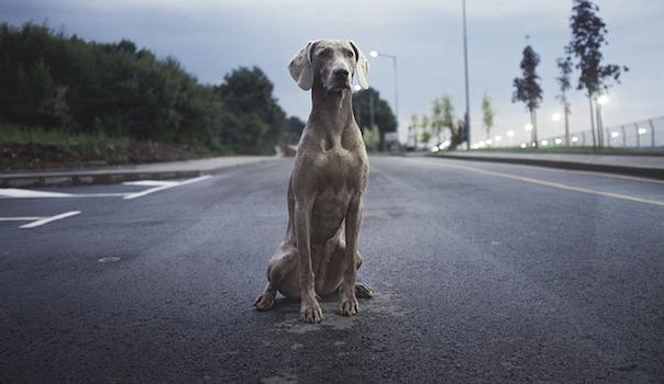 breed-2600691_640.jpg