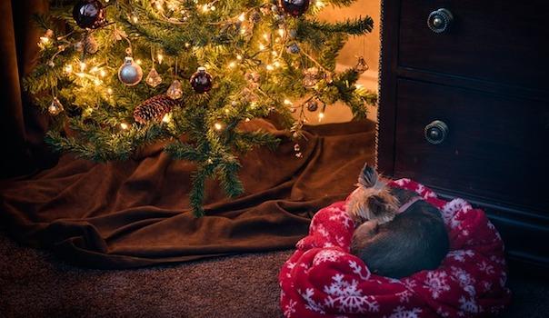 christmas-2727509_640.jpg