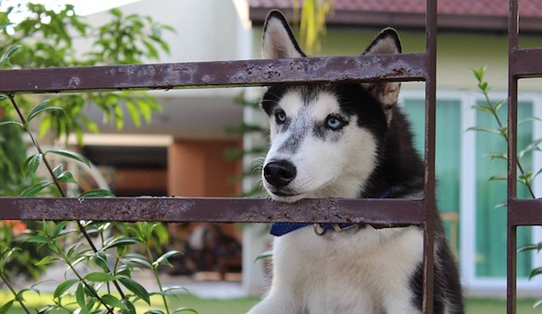 dog-2224169_640.jpg