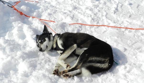 dog-2600316_640.jpg