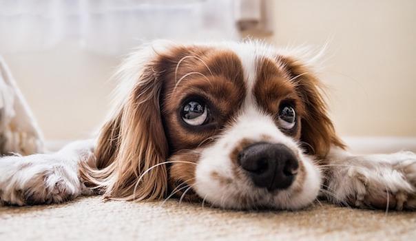 dog-2785074_640.jpg