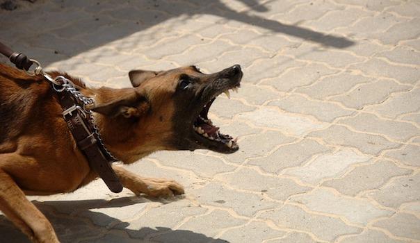 dog-900215_640_1.jpg