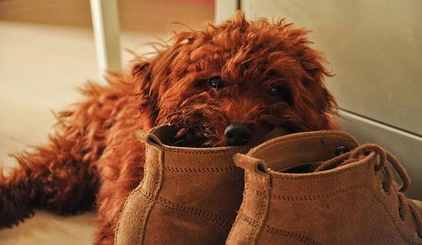 pet-dog-2811440_640.jpg