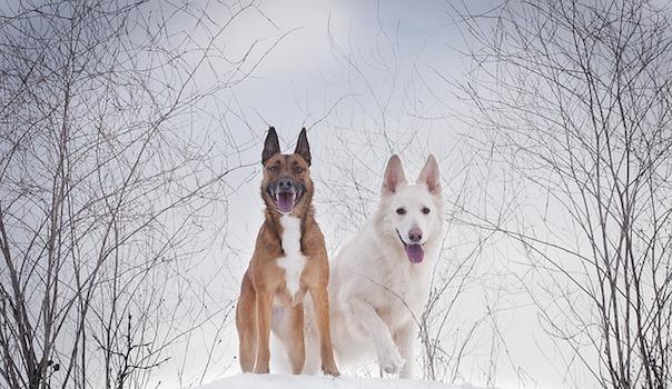 winter-3069735_640.jpg