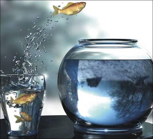 comfort-zone-fish4.jpg