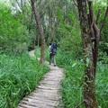 A Lósi-patak mentén - A Gyadai tanösvény