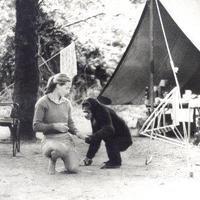 Afrikában, majmok  közt - ismerd meg Jane Goodall-t!