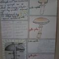 Tabló a gombákról