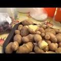 A 3.d-sek konyhakertjükben termett krumplit kóstolnak