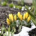 Tavaszi mondókák kicsiknek és középsős ovisoknak