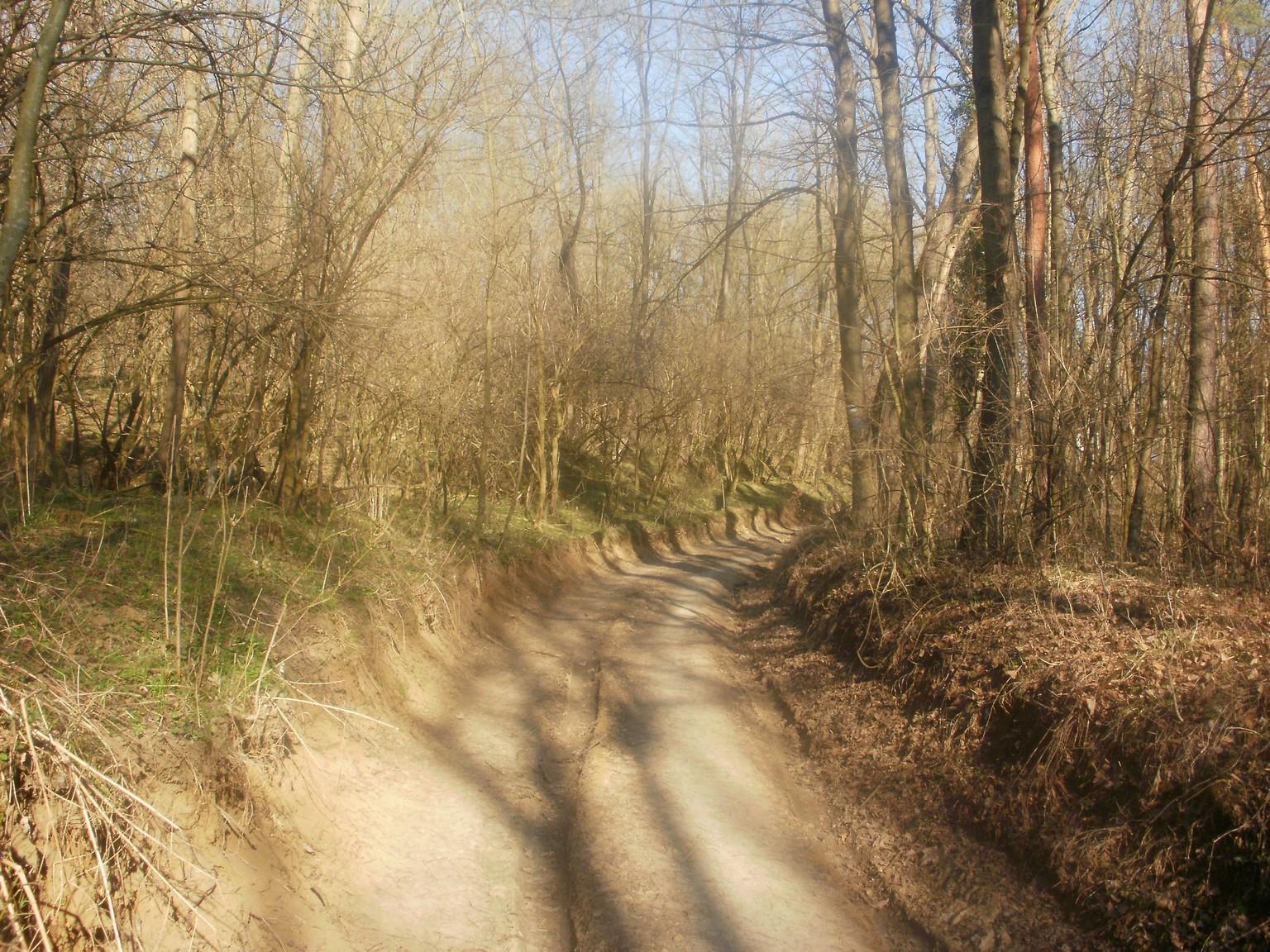 Grábóc feletti erdők