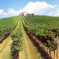 Olaszország első a bortermelésben!